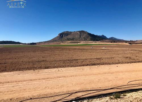 Country land - Re-sale - Aspe - Aspe